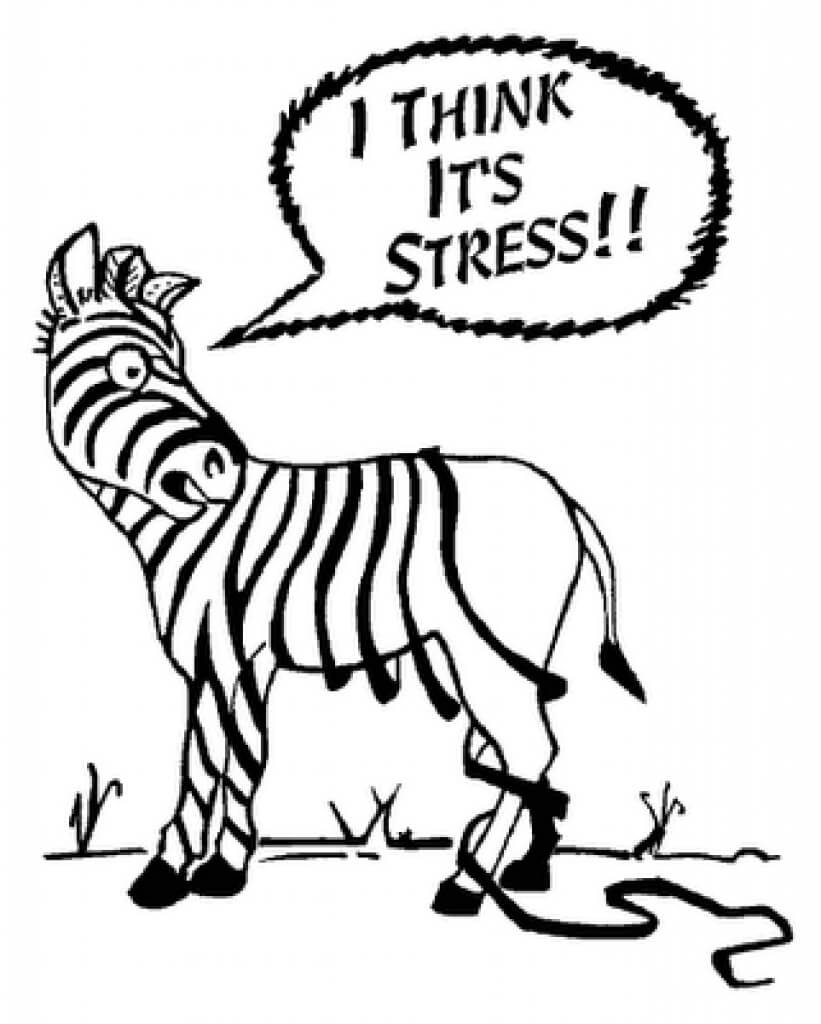 Dealing with PhD stress